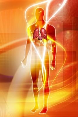 """Human Body With Lungs And Heart"" by dream designs via  freedigitalphotos.net"